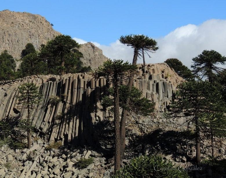 abekattens skræk træ