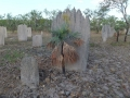 Magnetic Termite mounds with L. humilis on the Stuart Highway S. of Darwin, Northern Territory of Australia.