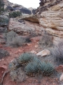 Habit at Childrens Discovery Loop Red Rocks, Nevada. December 26, 2007.